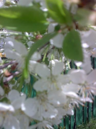 разве весна не прекрасное время года )