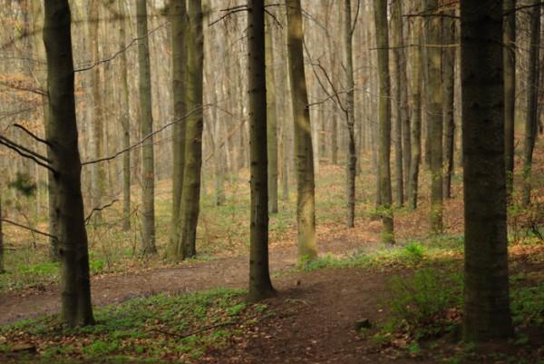 Волшебный лес.