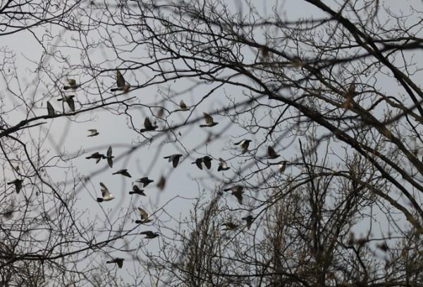 Голуби летят над нашей зоной..