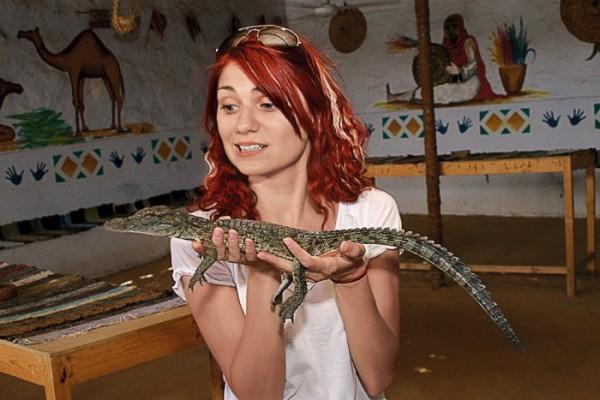 Перевелись крокодилы в Ниле.. а молодые не успевают вырасти. Дохнут во цвете сил от обильного внимания туристов :(