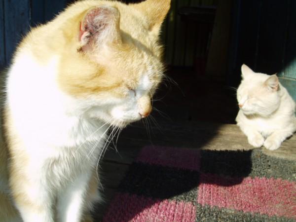 Тимотей и Макс