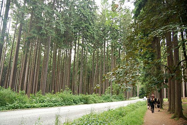 в темно-синем лесу Cerveny Kostelec, Czech Republic 20/06/2008