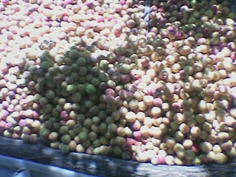 Это абрикосы...Собирали с земли после ветра...(Это ушло на чачу,компоты и варенья уже были закрыты)