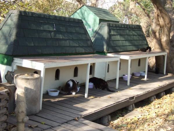 Домики для котят на территории парламента