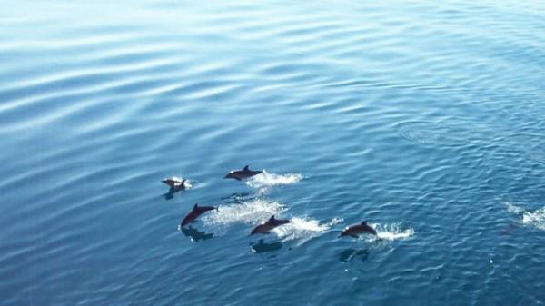 Черное море!!!!!!!!!