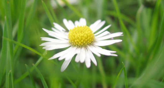 Это мой цветок...