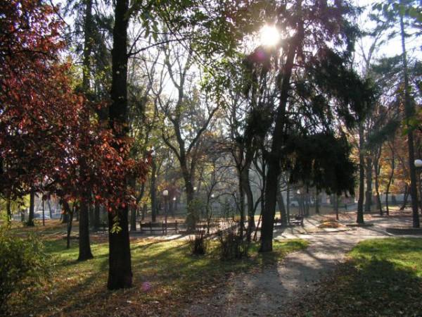 а это начало/продолжение львовской осенней серии. тоже - избранные фото например, солнце в листве
