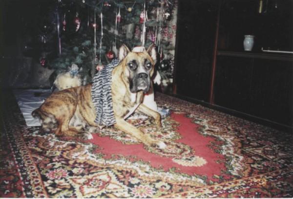 Моя любимая собака Джина...