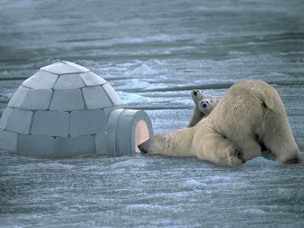 Пйатачог, выхади! Медвед пришолъ..