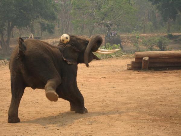 Слоненок. Таиланд