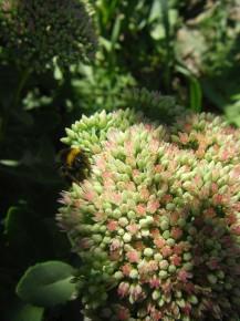Солнечный день, пчелка-труженица собирает сладкий нектар!