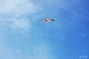 Мы вправе лететь, куда хотим, и быть такими, какими мы созданы.