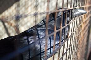 Дворик с воронами