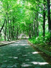 Дорога в парковой тиши.