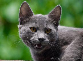 Хищник семейства кошачьих