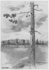 Один из моих ранних рисунков. Графика, карандаш