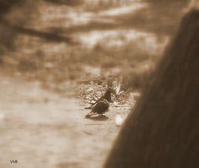 Прогулка голубей