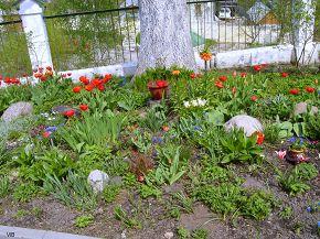 Цветы при Тихвинской церкви