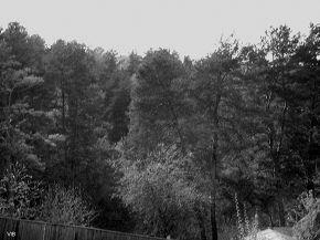 Городищенский лес