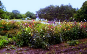 Цветы ботанического сада имени Гришко