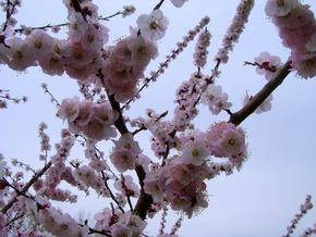 Небо цвета сакуры