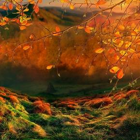 «Осенние огни» (из серии «Осень - рыжая подружка»)