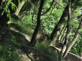 дерева з каменю