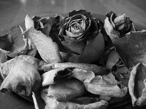 обесчала черную розу - пожалуйсто =)