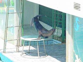 ялтинский дельфинарий