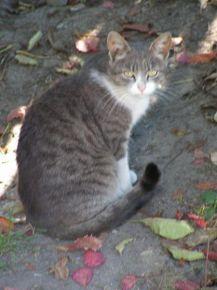 Ця мила кішечка зустрічала нас біля готелю
