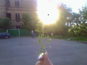 цвяточек-солнце))