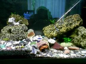 Просто мой аквариум. Увлекаюсь рыбками.