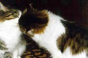 Не думал, что коты умеют целоваться :))
