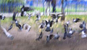 119 минут гонял голубей пока успокоился на этом снимке. Не фото шоп! Чистое фото!! ;)) Хотя неудовлетворён.. ;(