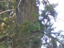 воон 2 попуги сидять на ёлке) а вообще их в парке толпа летает))