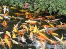 рай для рыбалова.... :)