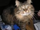 Кошка-доброта