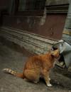 коты и котята