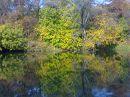 Осень на реке Кинель