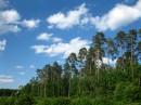 Боярский лес.