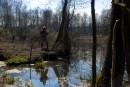 Бесовской лес 3
