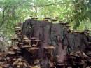 Скала в Киевском лесу!