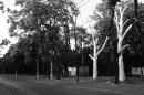 Французский бульвар, г.Одесса