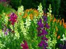 Буйство цветов