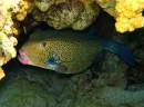 Рыба Кубик с носиком )))