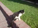Кот из Бреста