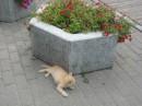 Котёнок из Брестской крепости