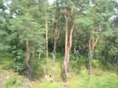 Лес вблизи Ворзеля