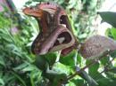 Змея на крыльях бабочки