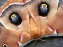 глаза бабочки